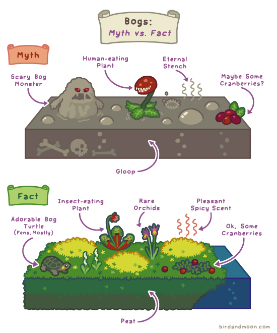 Bogs: Myth vs Fact