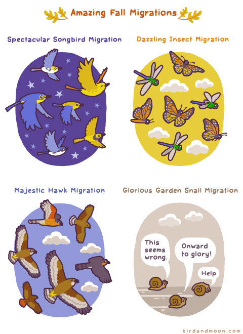 Amazing Fall Migrations