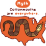 Cottonmouth Myths and Facts
