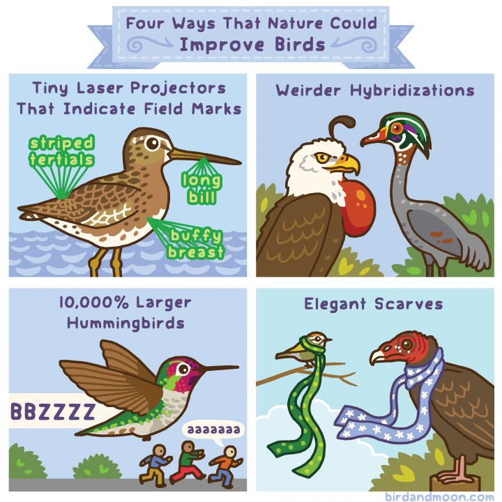Improving Birds