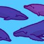 Beaked Whales