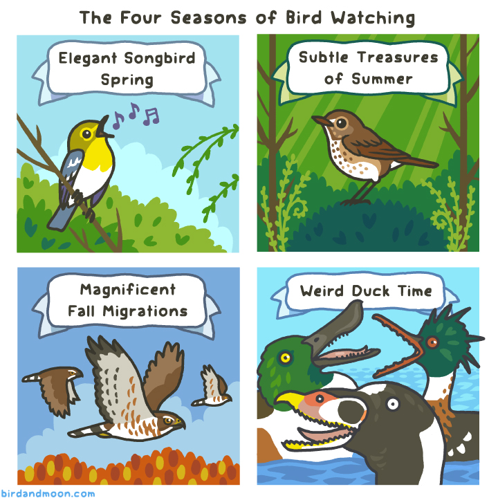 Four Seasons of Bird Watching