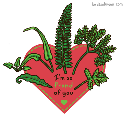Nature Valentine: Ferns