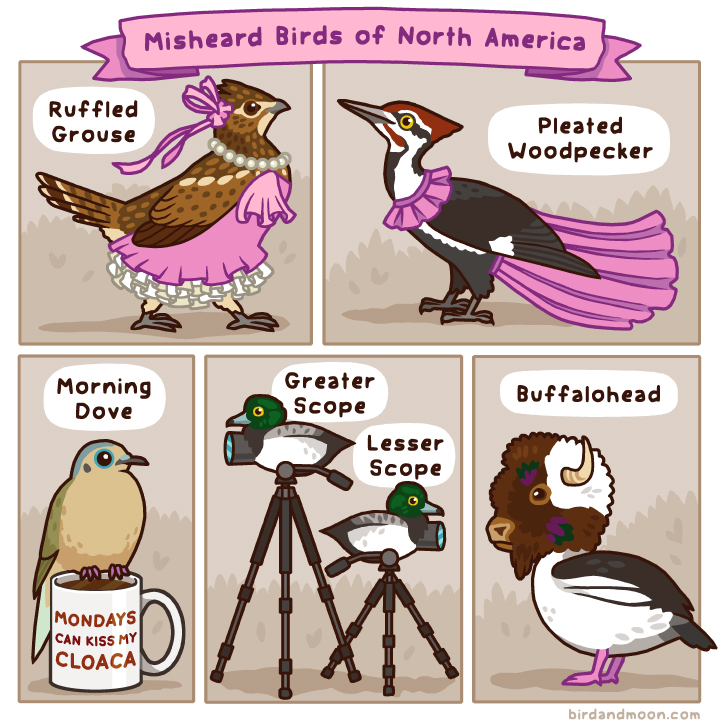 Misheard Birds of North America