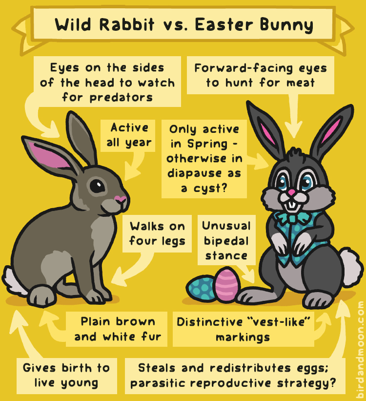 Wild Rabbit vs Easter Bunny
