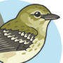 Increasingly Confusing Fall Warblers